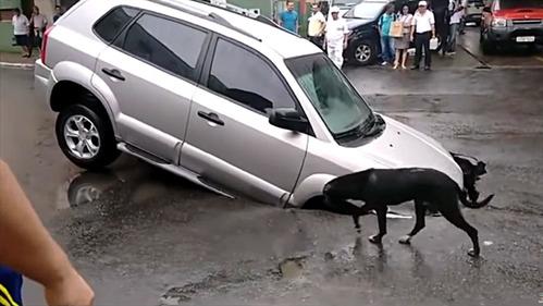 Hyundai Tucson провалился в дорожную яму из-за собаки – смотреть видео на Am.ru